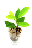 Thai coins and green plant growing in glass Stock Photography