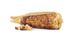 Thai corn isolated on white background Stock Photos