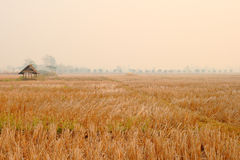 Thai countryside Royalty Free Stock Photography