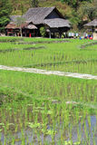 Thai Countryside Stock Image