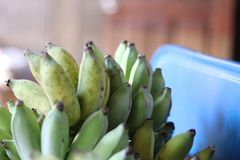 Thai Cultivated banana. Cultivated banana is a fruit that so favorite in Thailand and abroad stock photography