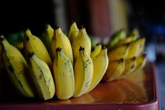 Thai cultivated banana. Selective focus of Thai cultivated banana, just cut out from the banana tree for sell in the market royalty free stock photography
