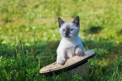 Thai cute kitten in straw hat Royalty Free Stock Image