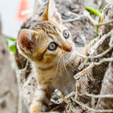 Thai cute naughty cat Stock Photo