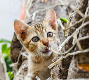 Thai cute naughty cat Stock Photography