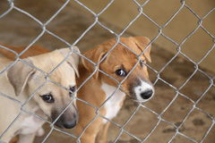 Thai cute puppy dog in cage waiting adopt to new home Stock Images