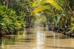 thai djungel arkivbild