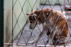 Thai dog in cage. For pet and rabies surveillance in summer concept Stock Photography