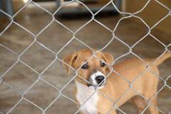 Thai dog in cage waiting adopt to new home Royalty Free Stock Images