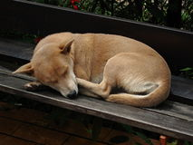 Thai dog is sleeping on the bench Royalty Free Stock Photos