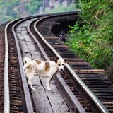 Thai dog. Stand in the Death railway track at Kanchanaburi , Thailand Royalty Free Stock Photos