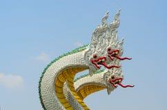 thai drake Arkivbild