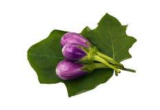 Thai eggplant Stock Photos