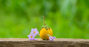 Thai Eggplant Stock Image