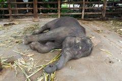 thai elefant Fotografering för Bildbyråer