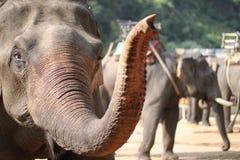Thai elephant Royalty Free Stock Image
