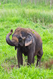 Thai elephant Royalty Free Stock Image