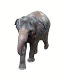 Thai  elephant Royalty Free Stock Photos