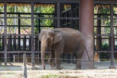Elephant in cage. Thai elephant in the cage in zoo stock image