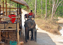 Thai elephant camp Royalty Free Stock Photos