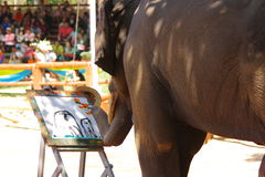 Thai elephant are drawing the picture. And those pictures were auctioned later stock photo