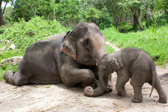 Thai elephant mom and baby Royalty Free Stock Photos