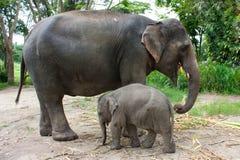 Thai elephant Stock Image