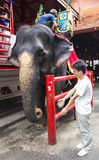 An Thai elephant is prepared to the walk Royalty Free Stock Photo