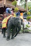 An Thai elephant is prepared to the walk Royalty Free Stock Photos