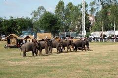 Thai elephant Royalty Free Stock Images