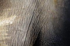 Thai elephant skin Stock Photo