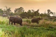 Thai elephants Royalty Free Stock Image