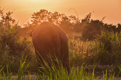Thai elephants Stock Photography
