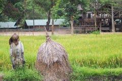 thai fältrice Royaltyfri Fotografi