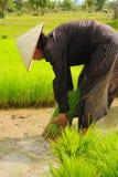 Thai famer. Royalty Free Stock Image