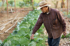 Thai farmer Stock Images