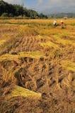 Thai Farmer Royalty Free Stock Photo