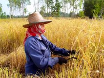 Thai Farmer  3 Royalty Free Stock Photos