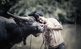 Thai Farmer with buffalo Stock Photography