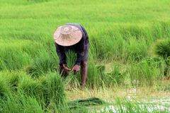 Thai farmer Stock Photography