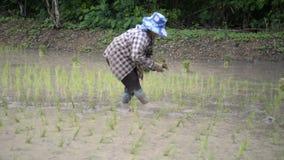 Thai farmer stock video