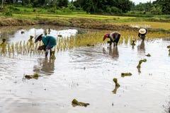 Thai farmer Stock Photo
