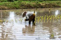 Thai farmer Stock Photography