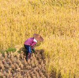 Thai farmer Stock Photos