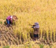 Thai farmer Stock Images