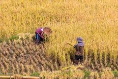 Thai farmer Royalty Free Stock Image