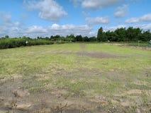 Thai farming rice plant royalty free stock images