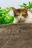 Thai fattened cats on wooden wall with tree background used as background image Stock Images