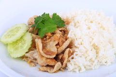 Thai Favorite Dish, Fried sliced pork with garlic with rice and cucumber Stock Photography