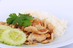 Thai Favorite Dish, Fried sliced pork with garlic with rice and cucumber Royalty Free Stock Photo